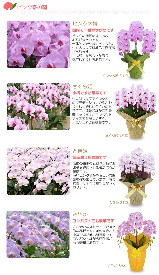 ピンク系の蘭